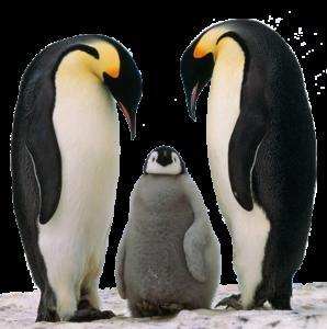 Google Penguin serait déployé en continu I-P-W agence web Marseille Aix en télétravail partout en France